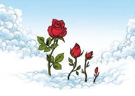 La rosa más bella