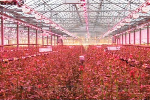 sistema-de-iluminacion-led-invernaderos-cultivos-de-flores-ornamentales